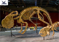 Outdoor Indoor Decoration Dinosaur Skeleton Replica Fiberglass And High Quality Steel
